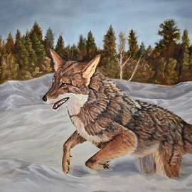 Winter Coyote by Bradley Page