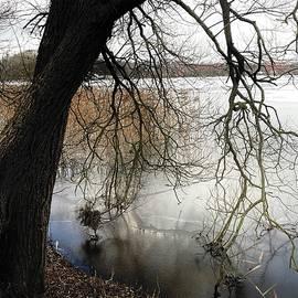 Winter Denmark  by Colette V Hera Guggenheim