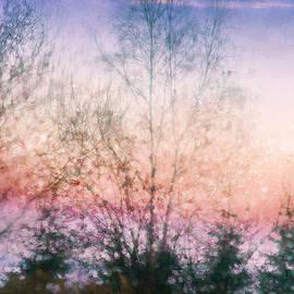 Winter Dusk by Terry Davis