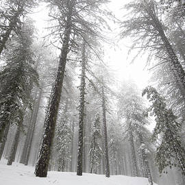 Winter forest landscape during wintertime by Michalakis Ppalis