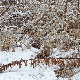 Winter Grasses by Barbara Ebeling