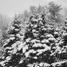 Winter Haven by Sandra Huston