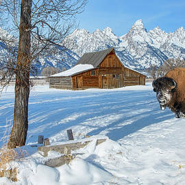 Winter in Jackson Hole Wyoming by Pauline Hall