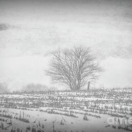 Winter In The Midwest by Luther Fine Art