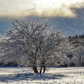 Winter Landscape With Flying Snow by Cindy Treger