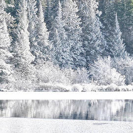 Winter Landscape of Snow Covered Forest and Lake by Charline Xia