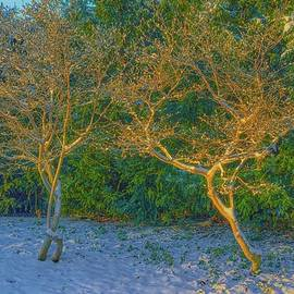 Winter light #k6 by Leif Sohlman