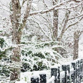 Winter by Mary Ann Artz