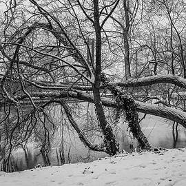 Winter morning 2 BW #k6 by Leif Sohlman