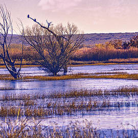 Winter Morning at the Refuge by Susan Warren