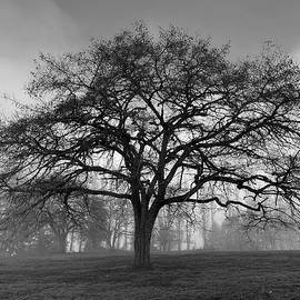 Winter Morning Tree Silhouette BW by Jerry Abbott