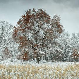 Winter Oak 1 by Trey Foerster