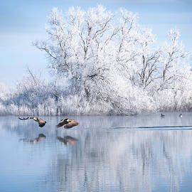 Winter Reflection by Judi Dressler