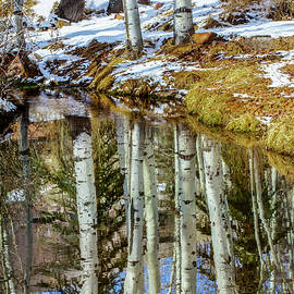 Winter Reflections by Terry Walsh