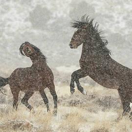 Winter Ruckus by Kent Keller