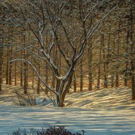Winter Shade by Trey Foerster