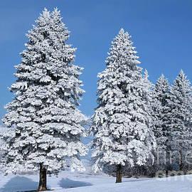 Winter Splendor by Deb Halloran