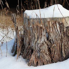 Winter Stump by David T Wilkinson