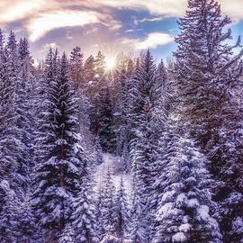 Winter Sun by Emily Kent