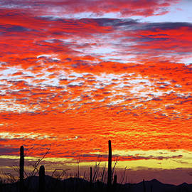 Winter Sunset Vista by Douglas Taylor