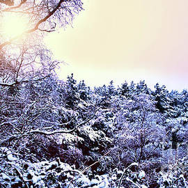 Winter sunshine by Chris Bee Photography