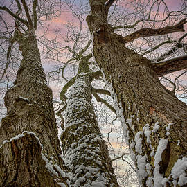 Winter Three Trees Reach for the Sky by LeeAnn McLaneGoetz McLaneGoetzStudioLLCcom