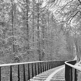 Winter Trail by Alex Mir