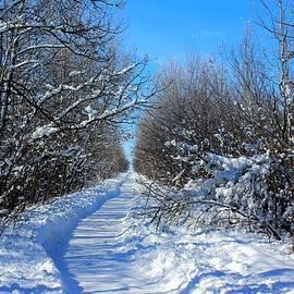 Winter Trail by Larry Trupp