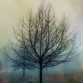 Winter Tree 5 at Claytor Lake State Park