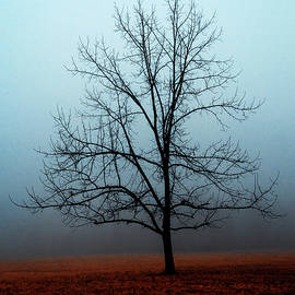 Winter Tree in The Fog by Denise Harty