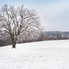 Winter Tree by Jennifer White
