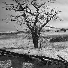 Lone Winter Tree by Jerry Abbott