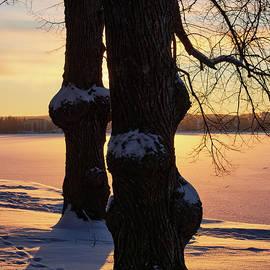 Winter Trees by Pyhajarvi by Jouko Lehto