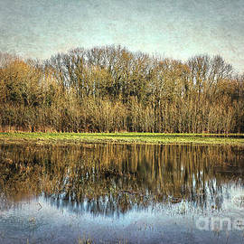 Winter Trees Reflected by Ian Lewis