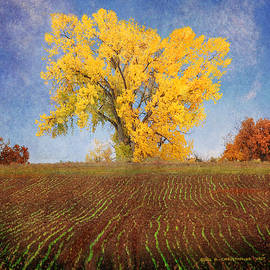 winter wheat on road S montezuma by R christopher Vest