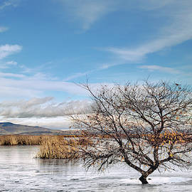 Winter Willow on a Frozen Lake  by Kathleen Bishop