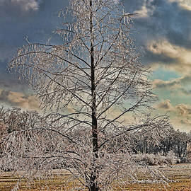 Winter Wonderland 4 by Allen Beatty