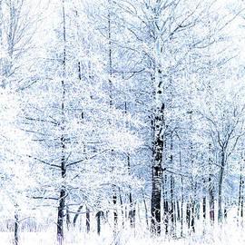 Winter Wonderland by Jennifer Jenson