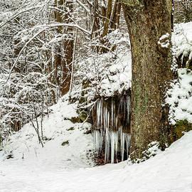 Winter Woodland by SC Shank