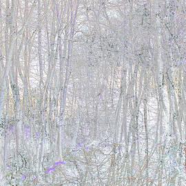 Winter Woods  by HB Lee