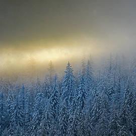 Winter's Glow  by Joy McAdams