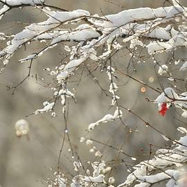 Winters Selective Colour by Greg Hayhoe