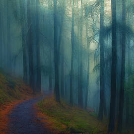 Wintry Forest Path by Terry Davis