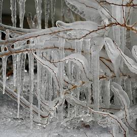 Wintry Ice Tree by Richard Bryce and Family
