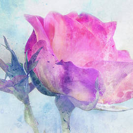 Wintry Rose by Terry Davis