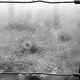 Www.wire Web by Clive Beake