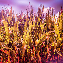 Wished Into The Cornfield by Jim Love