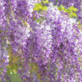 Wisteria in Bloom by Alex Mir