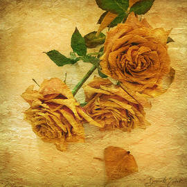 Withering Roses by Barbara Zahno