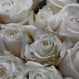 White Rose Destiny by David Zimmerman